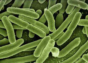 bacterias-en-los-cepillos-de-dientes